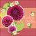 Dandelion Dust Designs