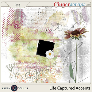 Life Captured Accents by Karen Schulz