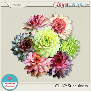 CU 67: Succulents - New