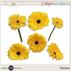 Daisies by Karen Schulz
